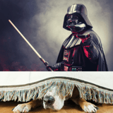 Star Wars : un chien voit Dark Vador dans un film et sa réaction fait le buzz jusqu'aux acteurs de la saga !