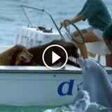 Un dauphin fait un bisou à un chien et en saute de joie !
