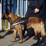 Ce chiot abandonné à l'âge de 2 mois est devenu chien-policier !