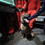Séisme en Turquie : un chien sauve un chat coincé sous les décombres depuis 30 heures