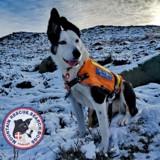 Enseveli sous la neige, il filme un chien de sauvetage qui le sauve et le résultat est adorable (Vidéo)