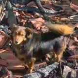 Un homme décède dans l'incendie de sa maison, les gens n'en reviennent pas de ce que fait son chien