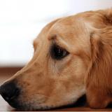 Comment aider votre chien à lutter contre le coup de blues saisonnier ?