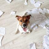 Ils laissent leurs devoirs sans surveillance : ce qu'en font les chiens fait hurler de rire les Internautes