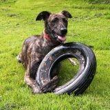 Un chien dévore les pneus d'une voiture de police ! [Vidéo]