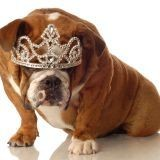 Un diamant avec les restes de votre chien !
