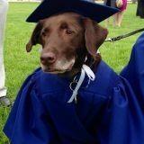 Hero, le chien diplômé (Photos et vidéo)