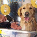 La station service... pour laver son chien !