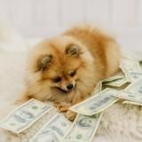 L'amour d'un chien, ça n'a pas prix, mais ça a un coût… 3 manières d'économiser !