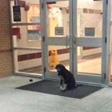 Il voit un chien devant son école et n'en revient pas de ce qui se passe les jours suivants