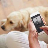 Spotify lance des playlists pour détendre les chiens, les chats… et les iguanes !