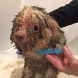 Sauvé d'un élevage cauchemardesque, ce chien qui a vécu l'horreur est méconnaissable