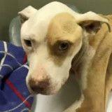 Promise à une mort certaine, cette chienne a été sauvée par deux enfants