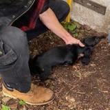 Ils découvrent les tristes conditions de vie de 30 chiens : l'éleveur avoue quelque chose qui fait froid dans le dos