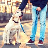 Nice : ville la plus accueillante de France pour les chiens d'après le classement 2021