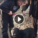 Après avoir été attaché à une chaîne pendant 15 ans, ce chien connaît enfin l'amour