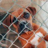 Michel Drucker, François Cluzet, Laëtitia Barlerin et 44 autres personnalités appellent à sauver les associations animales