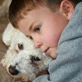 Les chiens aiment-ils vraiment leurs maîtres ?