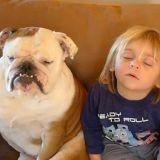 Un enfant et un chien s'endorment en même temps (Vidéo du jour)