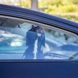 Canicule : ils font cuire des biscuits dans une voiture pour sensibiliser aux dangers des fortes chaleurs