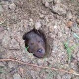 Ils enterrent un chien vivant, la suite est encore plus abominable