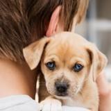 « Tuer un chien est moins puni que briser une statue » : Loïc Dombreval veut durcir les peines pour cruauté envers les animaux