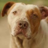 Des drones pour surveiller les chiens errants de Houston