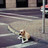 Depuis 5 ans, ce chien refuse de quitter la rue où son maître est décédé