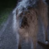 Un chien abandonné chante qu'il va survivre… (Vidéo du jour)