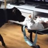 Elle laisse son bébé avec son Pitbull : elle n'en croit pas ses yeux quand elle comprend ce qu'il va faire !