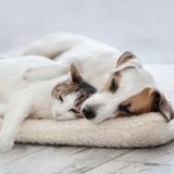 Comment bien adopter un chien ou un chat ?
