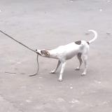 Le chien qui entraîne les enfants à la corde à sauter… (Vidéo du jour)