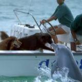 Assistez au coup de foudre d'un chien et d'un dauphin !