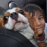 Les instants les plus craquants partagés entre des enfants et leur chien
