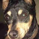 Le vétérinaire lui annonce qu'elle doit euthanasier son chien, 5 mois plus tard c'est l'horreur