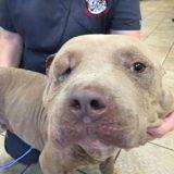 Ils font euthanasier leur chien, 6 mois plus tard ils vont sur Facebook et n'en reviennent pas !