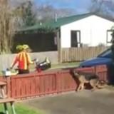 Ne sachant pas qu'il est filmé, le facteur s'approche du chien et la vidéo fait le tour du monde