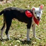 Elle adopte un chien dans un refuge, «oublie» de le nourrir et donne la pire des excuses