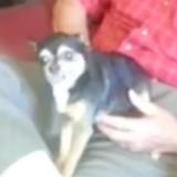 Cet adorable chien fait le mort pour ne pas partir du parc (Vidéo)