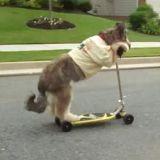 Un chien fait de la trottinette (Vidéo du jour)