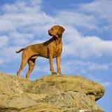 Ce chien a survécu à une chute de 100 mètres de haut !