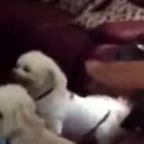 Le chien s'approche de la grand-mère : elle tombe de son fauteuil en comprenant ce qu'il veut !