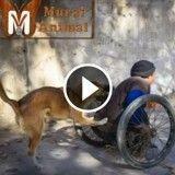 Tous les jours, cet homme en fauteuil roulant part travailler, poussé par son chien fidèle