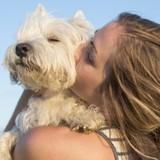 Améliorez votre relation avec votre chien : Canidélite lance une plateforme de formation en ligne pour les maîtres !