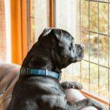 Son chien regarde par la fenêtre tous les jours, quand elle comprend pourquoi elle décide d'agir !