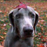 15 chiens qui célèbrent dignement l'automne (Photos)