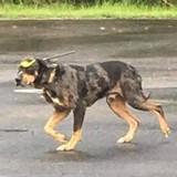 Il trouve un chien avec une flèche dans la tête, contacte son maître et a les larmes aux yeux