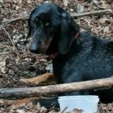 Chien abandonné en forêt : ce que découvre le vétérinaire lui glace le sang