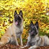 Le job de ces 3 chiens ? Sauver des arbres !
