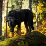 En pleine balade avec leurs chiens, ils voient quelque chose par terre et poussent un cri